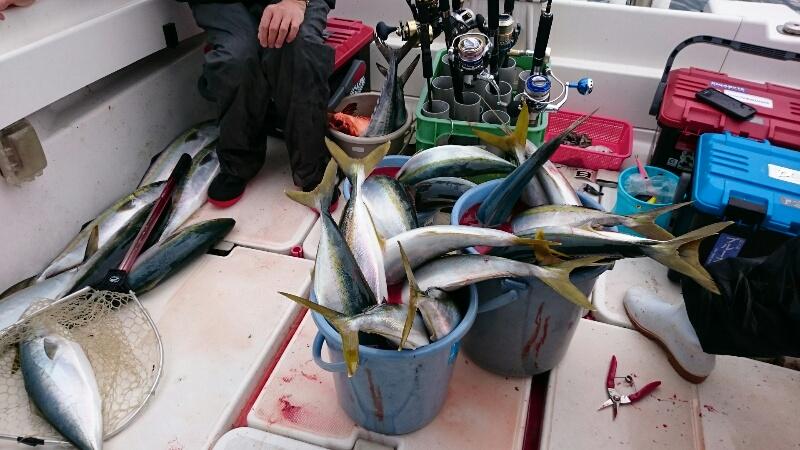 メジロ大漁