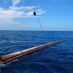 【各地の釣りの紹介】「受け」って何!? テンポが早いぞ!高知県土佐湾の真夏のシイラ