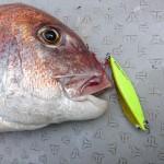 大鯛連発!? タックルハウス「タイジグ」使い方と釣行インプレ
