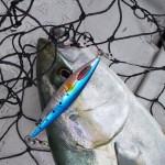 DAIWAから新発売の「ソルティガ FKジグ SLJ」の使い方・実釣レビュー(インプレ)