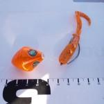 面白釣法!テキサスリグ+鯛ラバ+ワームで真鯛や甘鯛を狙ってみた!