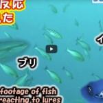 ジギングに役に立つ「検証系水中動画」が満載!おすすめの水中動画Youberをご紹介!