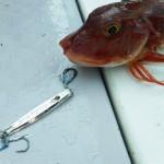 【釣行レビュー】ついに発売!「マイクロフリップ・エッジ」を実際に使ってみた!