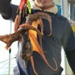 面白いの?タコのメッカ明石まで人気急上昇の「船のタコルアー釣り」に挑戦してきた!